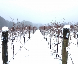 Holly's Garden Vineyard in Winter